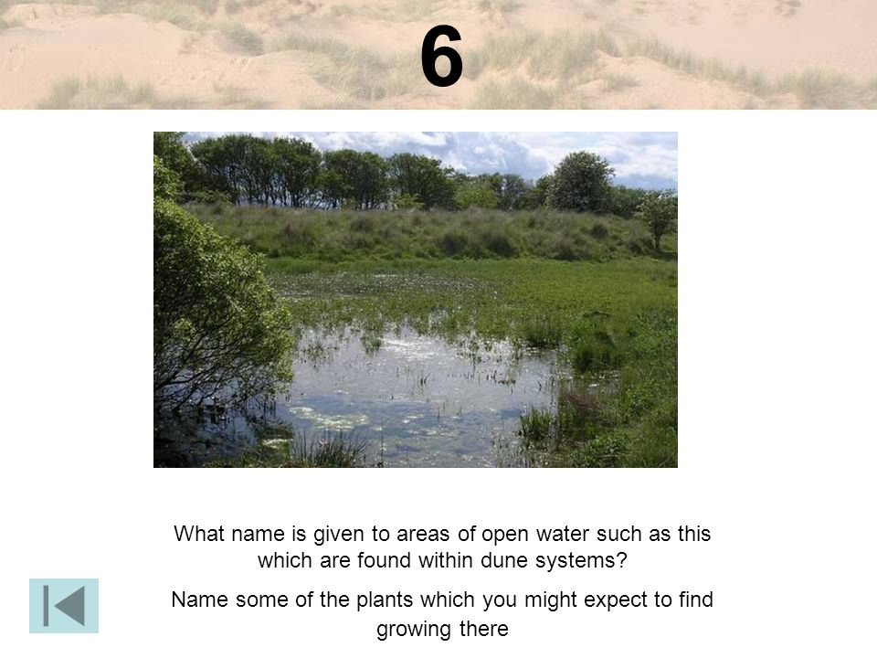 6 What name is given to areas of open water such as this which are found within dune systems.