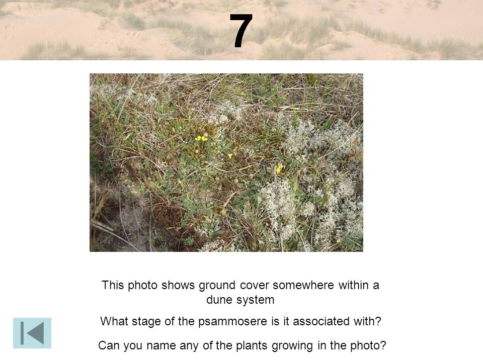 7 This photo shows ground cover somewhere within a dune system What stage of the psammosere is it associated with.
