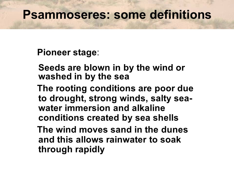 Psammoseres: some definitions Pioneer stage: Seeds are blown in by the wind or washed in by the sea The rooting conditions are poor due to drought, strong winds, salty sea- water immersion and alkaline conditions created by sea shells The wind moves sand in the dunes and this allows rainwater to soak through rapidly