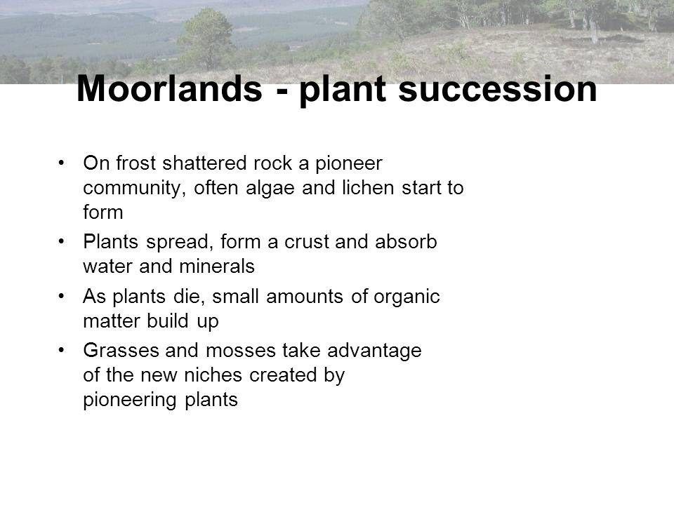 Conservation and regeneration measures e.g.