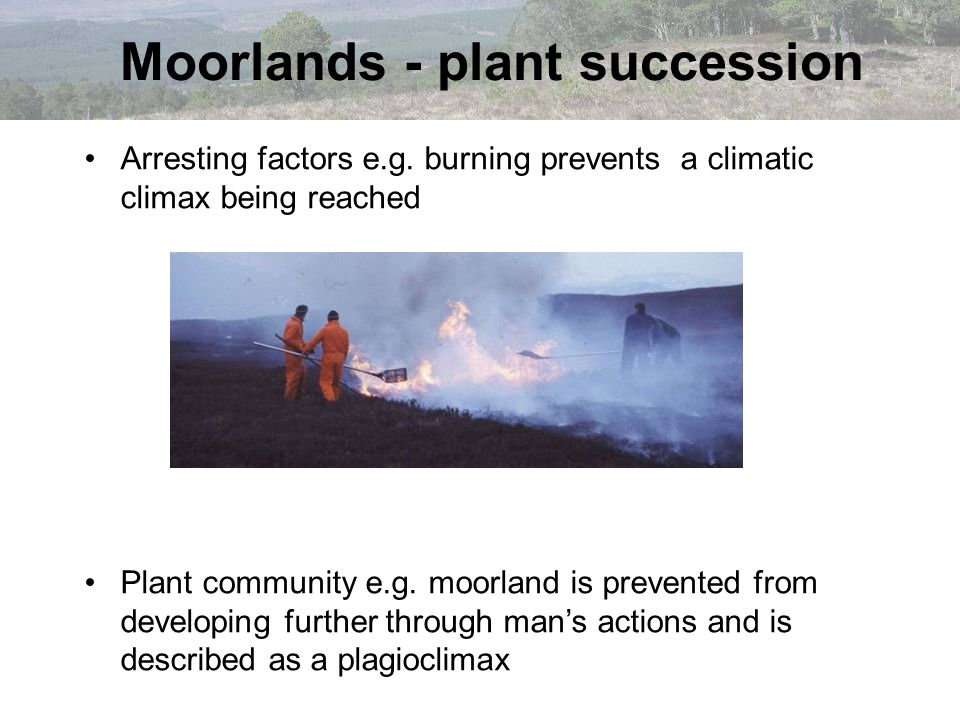 Arresting factors e.g. burning prevents a climatic climax being reached Plant community e.g. moorland is prevented from developing further through man