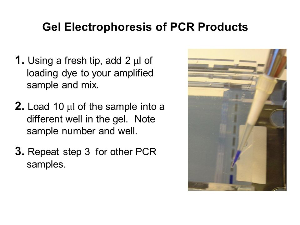 3. Repeat step 3 for other PCR samples. 2.