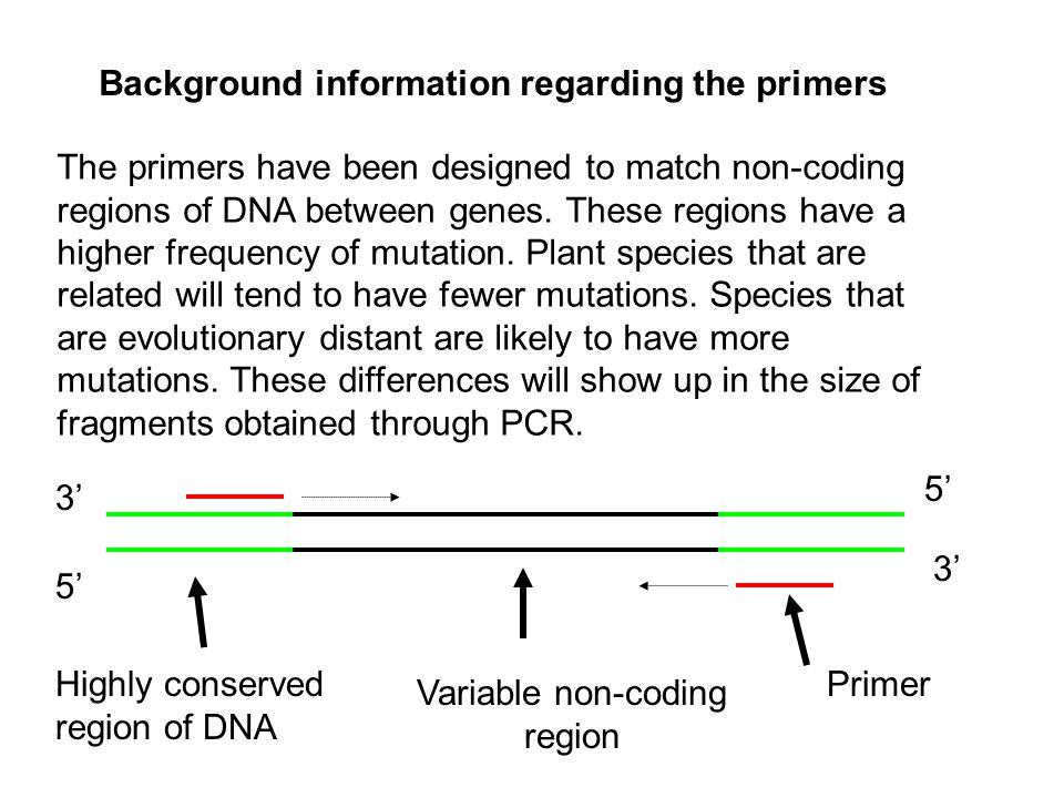 The primers have been designed to match non-coding regions of DNA between genes.