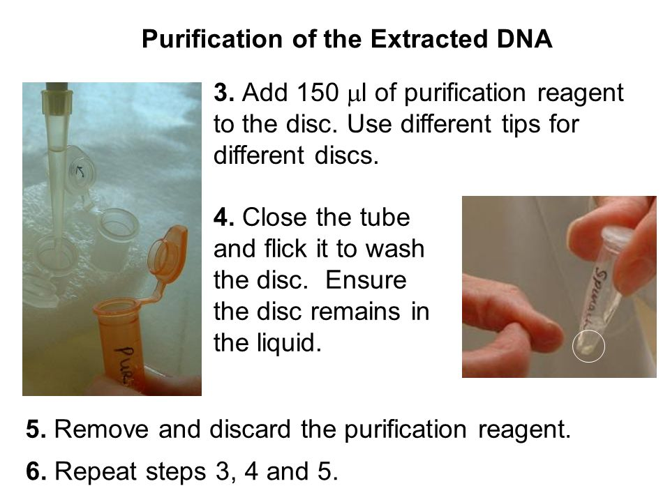 3. Add 150 l of purification reagent to the disc.