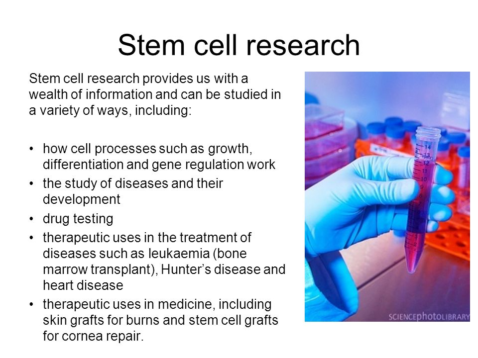 Stem cell research Stem cell research provides us with a wealth of information and can be studied in a variety of ways, including: how cell processes