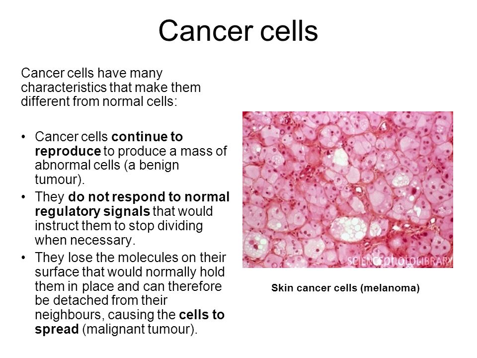 Cancer cells Cancer cells have many characteristics that make them different from normal cells: Cancer cells continue to reproduce to produce a mass o