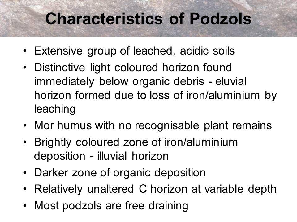 Characteristics of Podzols Extensive group of leached, acidic soils Distinctive light coloured horizon found immediately below organic debris - eluvia