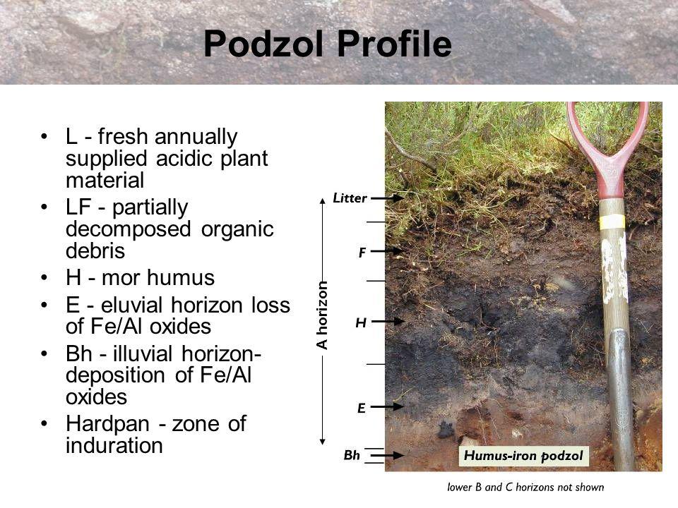 Podzol Profile L - fresh annually supplied acidic plant material LF - partially decomposed organic debris H - mor humus E - eluvial horizon loss of Fe