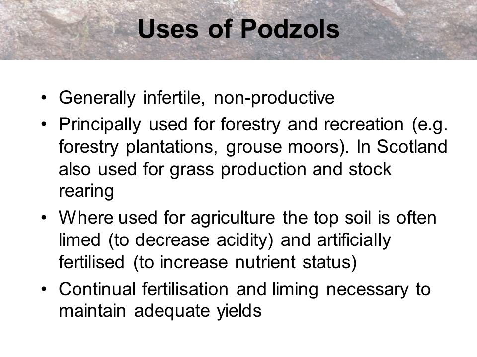 Uses of Podzols Generally infertile, non-productive Principally used for forestry and recreation (e.g. forestry plantations, grouse moors). In Scotlan