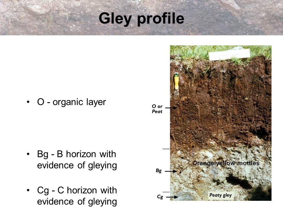 Gley profile O - organic layer Bg - B horizon with evidence of gleying Cg - C horizon with evidence of gleying Orange/yellow mottles
