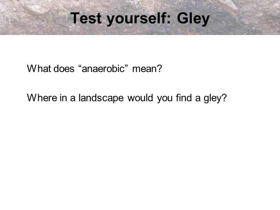 Test yourself: Gley What does anaerobic mean? Where in a landscape would you find a gley?