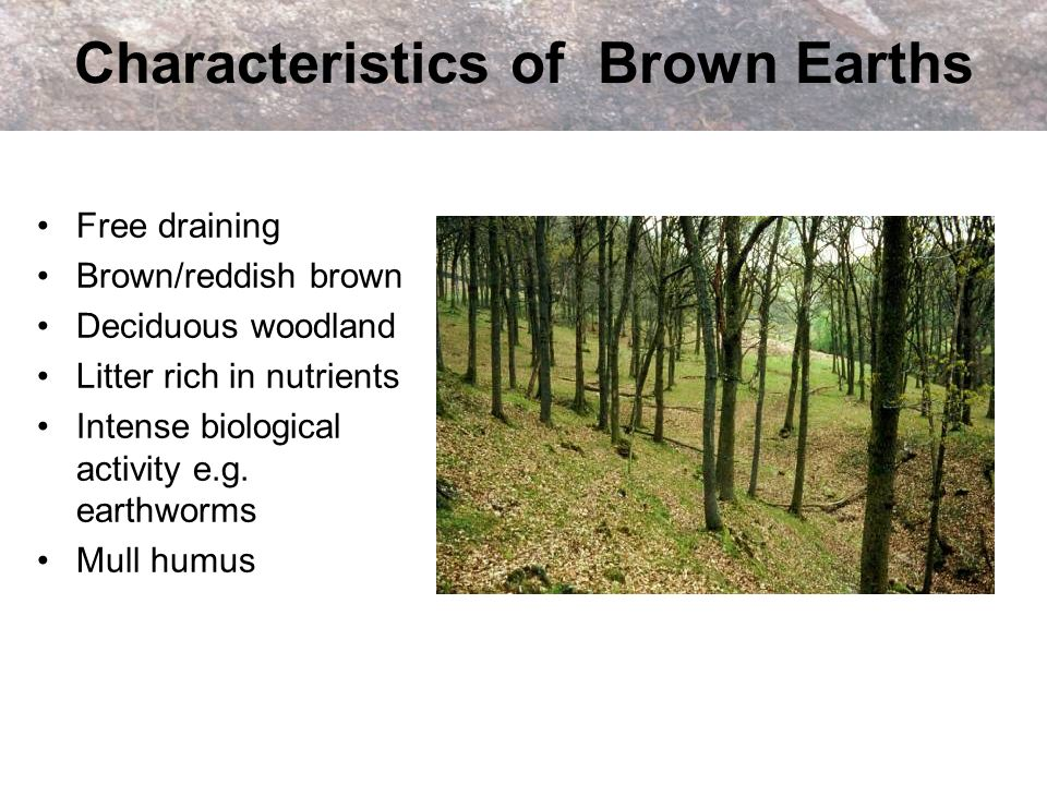 Characteristics of Brown Earths Free draining Brown/reddish brown Deciduous woodland Litter rich in nutrients Intense biological activity e.g. earthwo