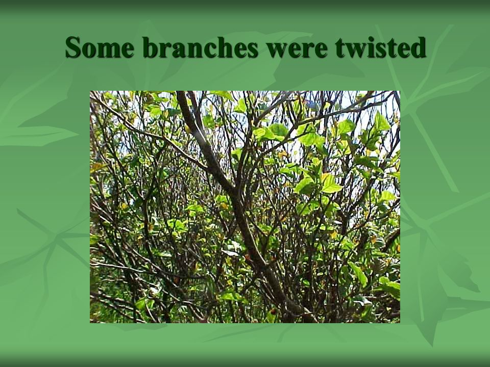 Some branches were twisted