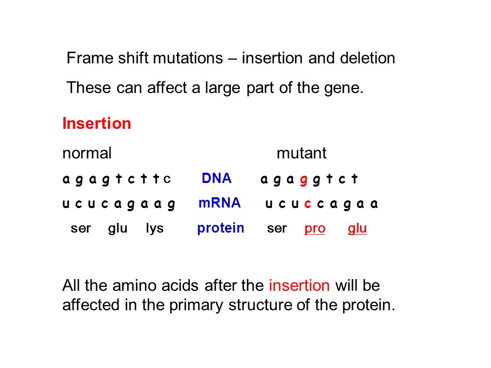 Frame-shift mutations – insertion and deletion These can affect a large part of the gene.