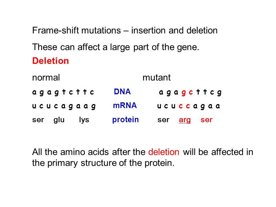 Frame-shift mutations – insertion and deletion These can affect a large part of the gene. Deletion normalmutant a g a g t c t t c DNA a g a g c t t c