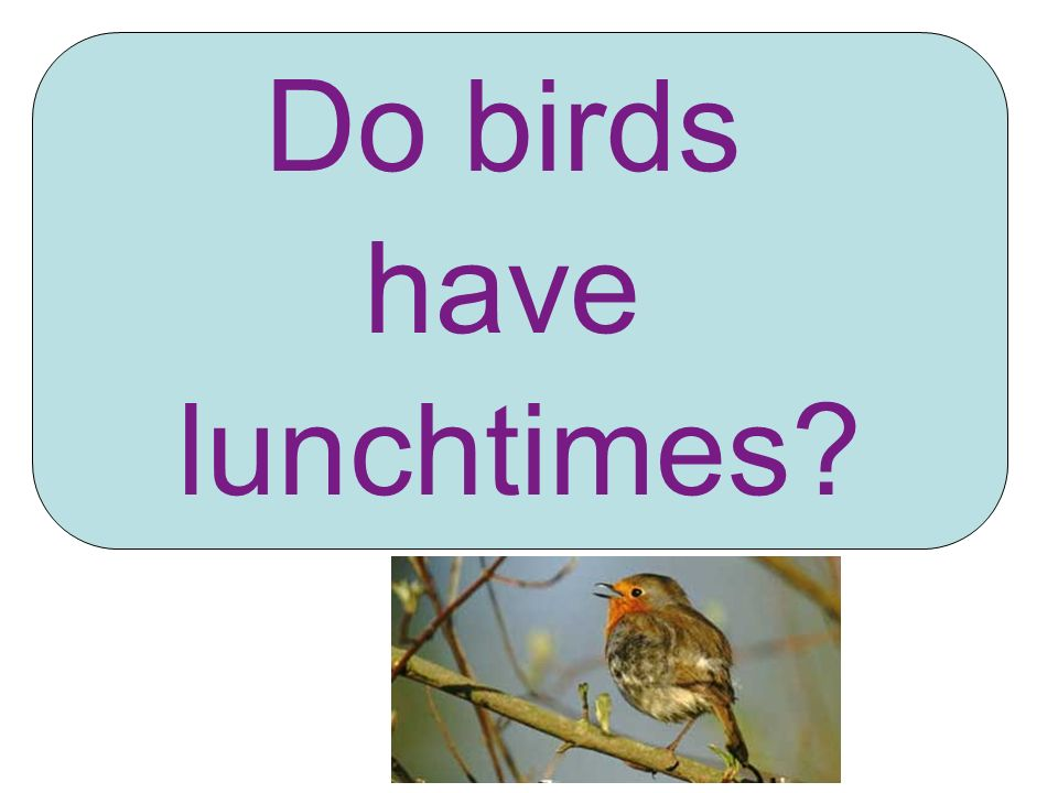 Do birds have lunchtimes?