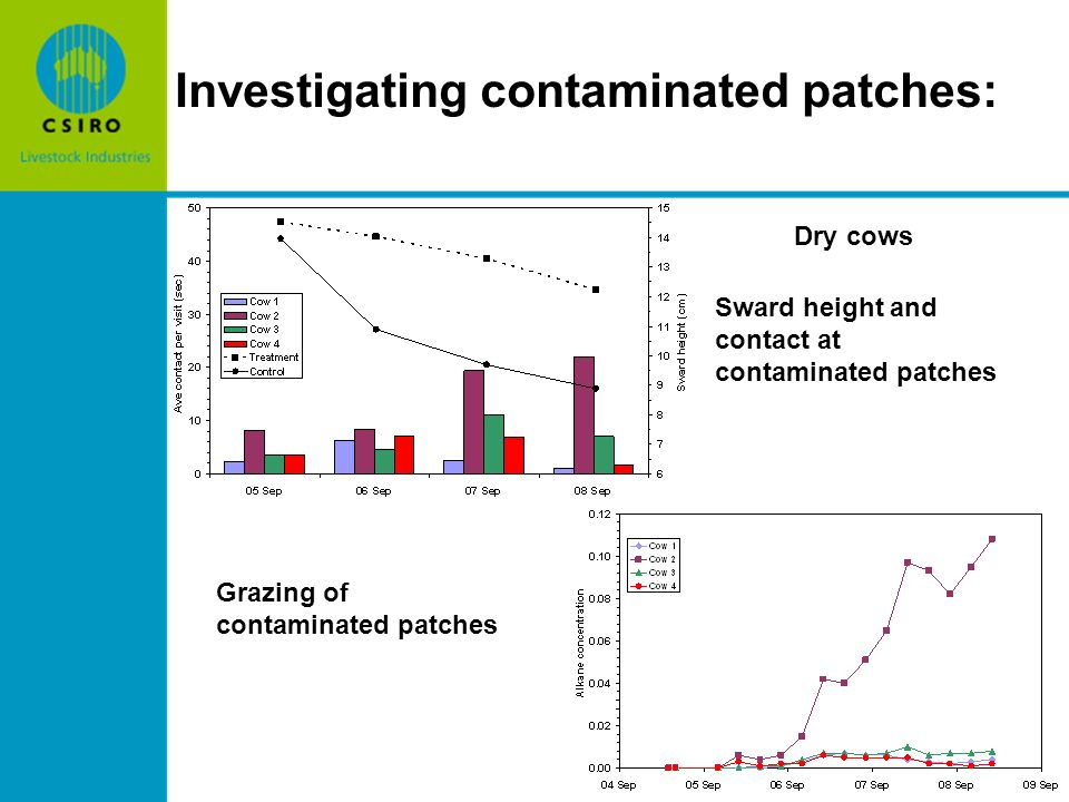 Investigating contaminated patches: Dry cows Sward height and contact at contaminated patches Grazing of contaminated patches