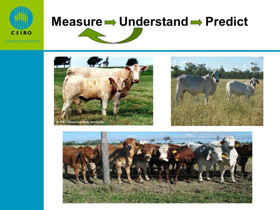 Measure Understand Predict
