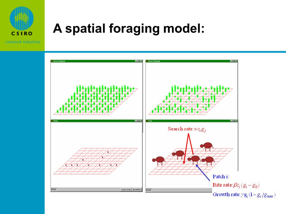 A spatial foraging model: