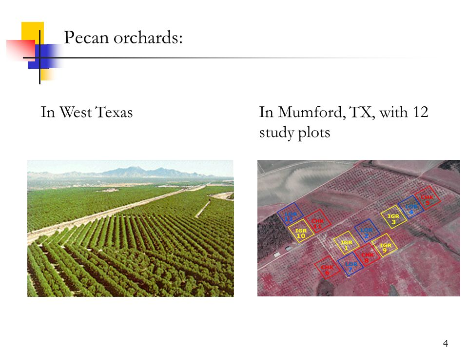 4 Pecan orchards: In West TexasIn Mumford, TX, with 12 study plots