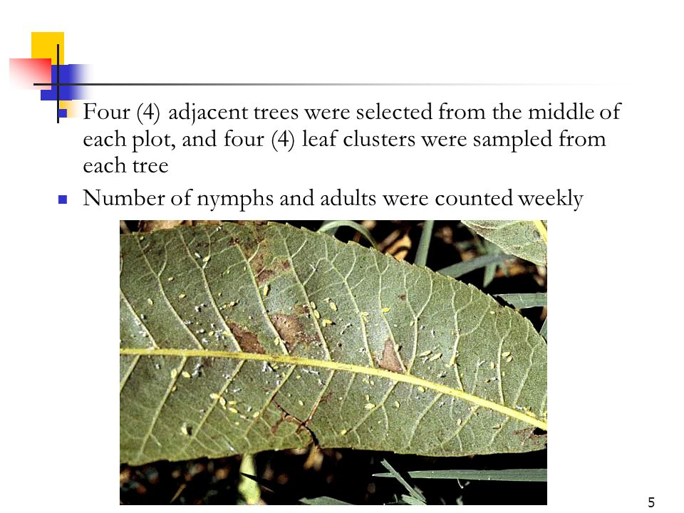 5 Four (4) adjacent trees were selected from the middle of each plot, and four (4) leaf clusters were sampled from each tree Number of nymphs and adul