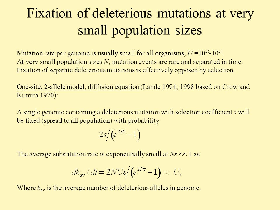 Fixation of deleterious mutations at very small population sizes Mutation rate per genome is usually small for all organisms, U =10 -3 -10 -1.