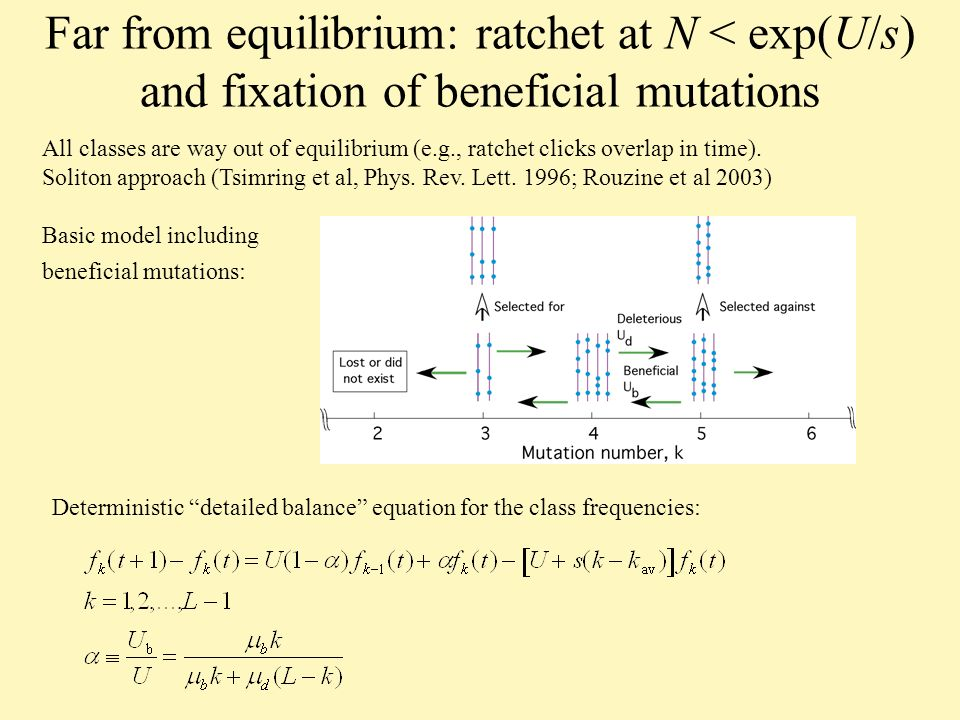 Far from equilibrium: ratchet at N < exp(U/s) and fixation of beneficial mutations All classes are way out of equilibrium (e.g., ratchet clicks overlap in time).