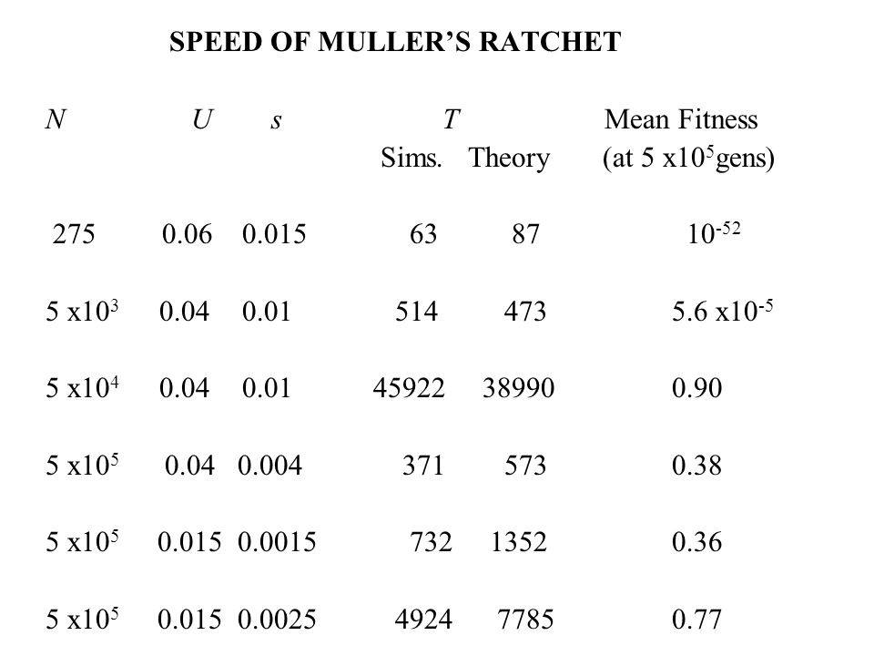 SPEED OF MULLERS RATCHET N U s T Mean Fitness Sims. Theory (at 5 x10 5 gens) 275 0.06 0.015 63 87 10 -52 5 x10 3 0.04 0.01 514 473 5.6 x10 -5 5 x10 4
