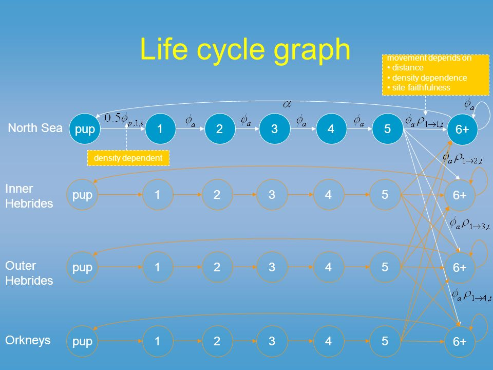 Life cycle graph pup12345 6+ North Sea pup12345 6+ Inner Hebrides pup12345 6+ Outer Hebrides pup12345 6+ Orkneys density dependent movement depends on