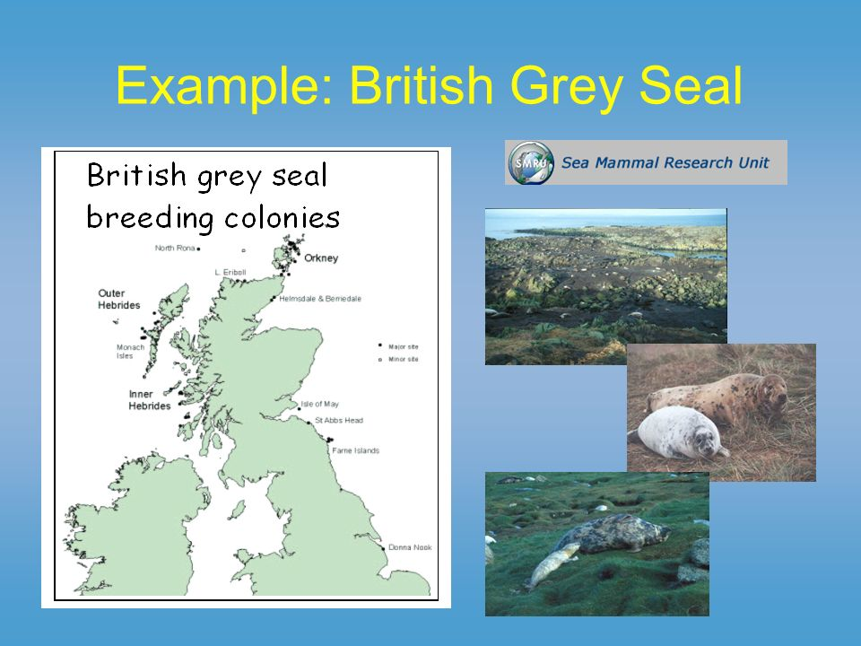 Surveying seals Hard to survey outside of breeding season: 80% of time at sea, 90% of this time underwater Aerial surveys of breeding colonies since 1960s used to estimate pup production (Other data: intensive studies, radio tracking, genetic, photo-ID, counts at haul-outs) ~6% per year overall increase in pup production