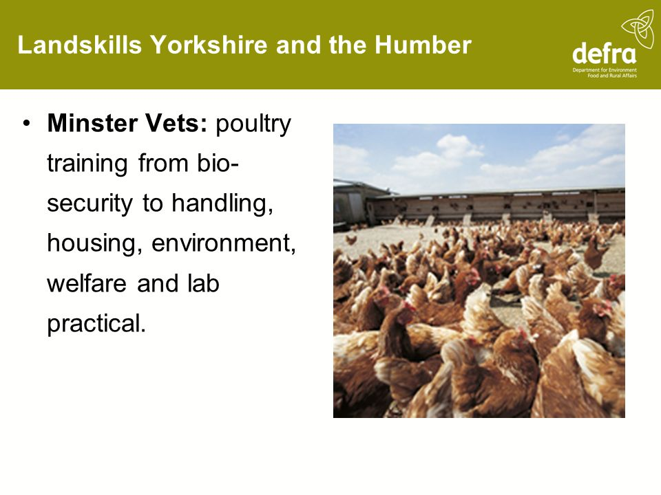 Landskills Yorkshire and the Humber Minster Vets: poultry training from bio- security to handling, housing, environment, welfare and lab practical.