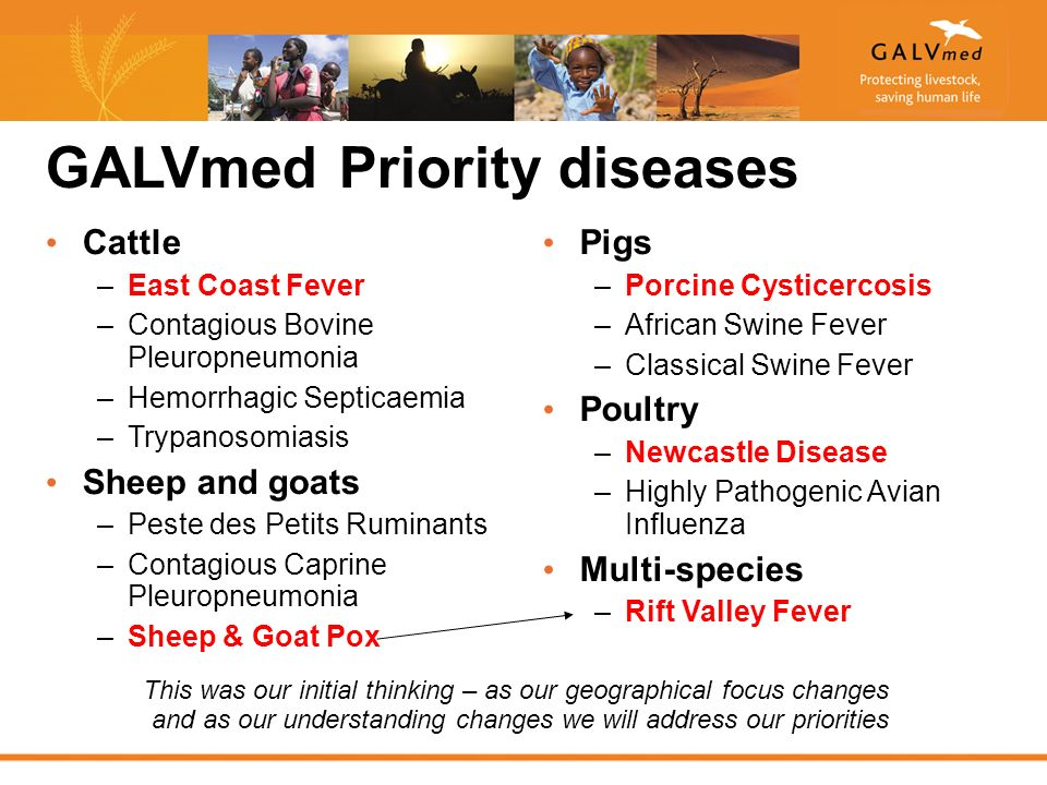 GALVmed Priority diseases Cattle –East Coast Fever –Contagious Bovine Pleuropneumonia –Hemorrhagic Septicaemia –Trypanosomiasis Sheep and goats –Peste des Petits Ruminants –Contagious Caprine Pleuropneumonia –Sheep & Goat Pox Pigs –Porcine Cysticercosis –African Swine Fever –Classical Swine Fever Poultry –Newcastle Disease –Highly Pathogenic Avian Influenza Multi-species –Rift Valley Fever This was our initial thinking – as our geographical focus changes and as our understanding changes we will address our priorities