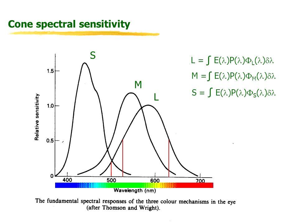 Cone spectral sensitivity L M S L = E( )P( ) L ( ) M = E( )P( ) M ( ) S = E( )P( ) S ( )