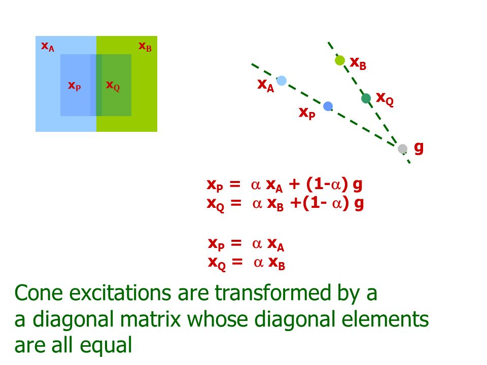 xBxB xPxP xQxQ xAxA x P = x A x Q = x B Cone excitations are transformed by a a diagonal matrix whose diagonal elements are not necessarily all equal The two models can be made to be the same if the convergence model has no additive component and if the invariance model has equal cone scaling