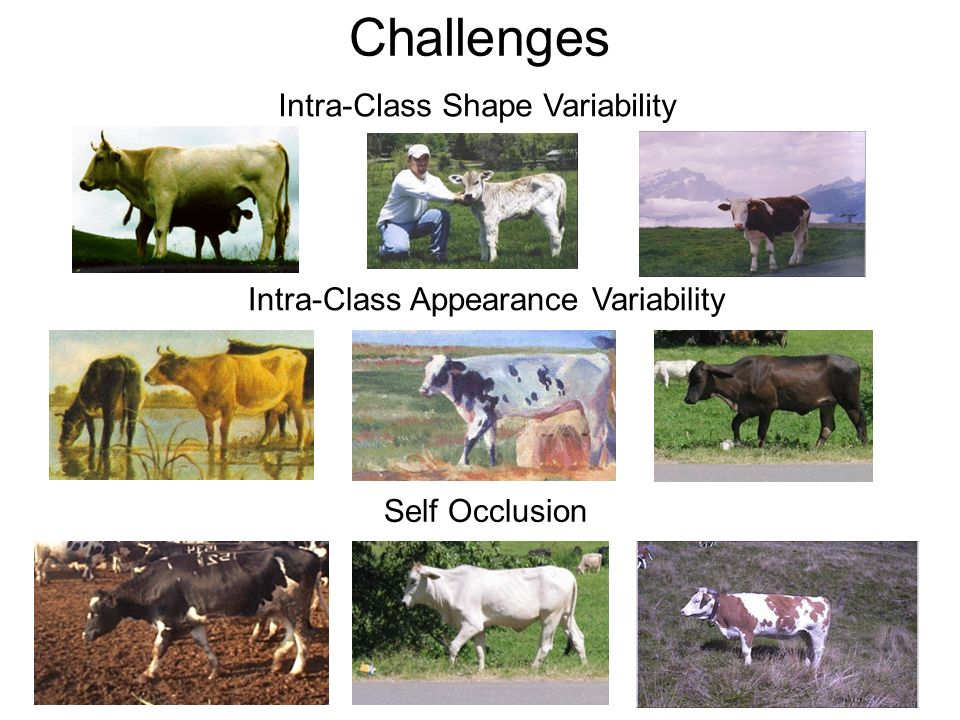 Challenges Self Occlusion Intra-Class Shape Variability Intra-Class Appearance Variability