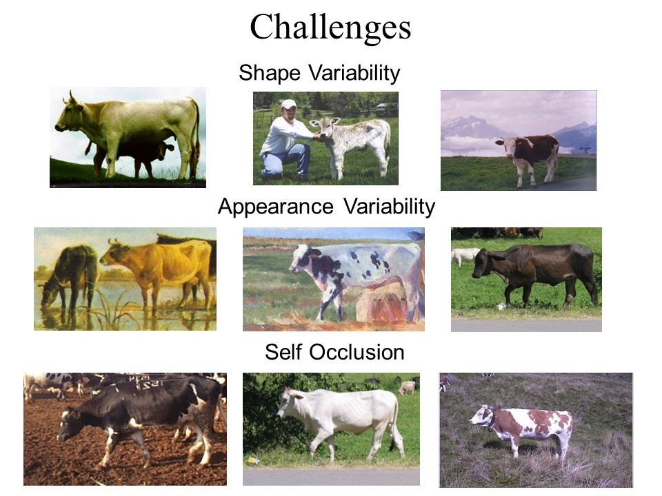 Challenges Self Occlusion Shape Variability Appearance Variability