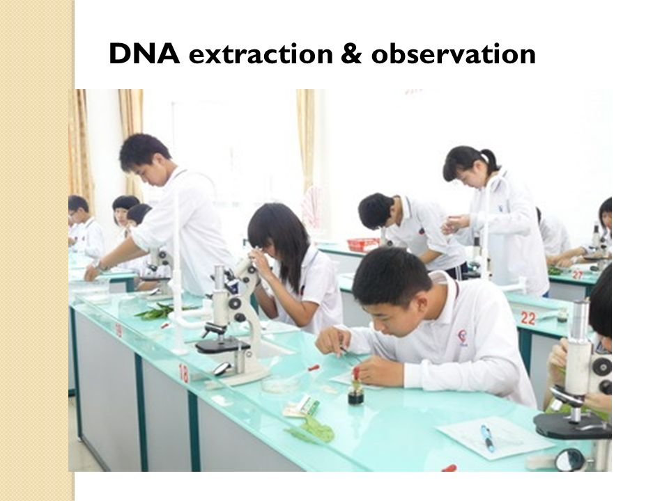 DNA extraction & observation