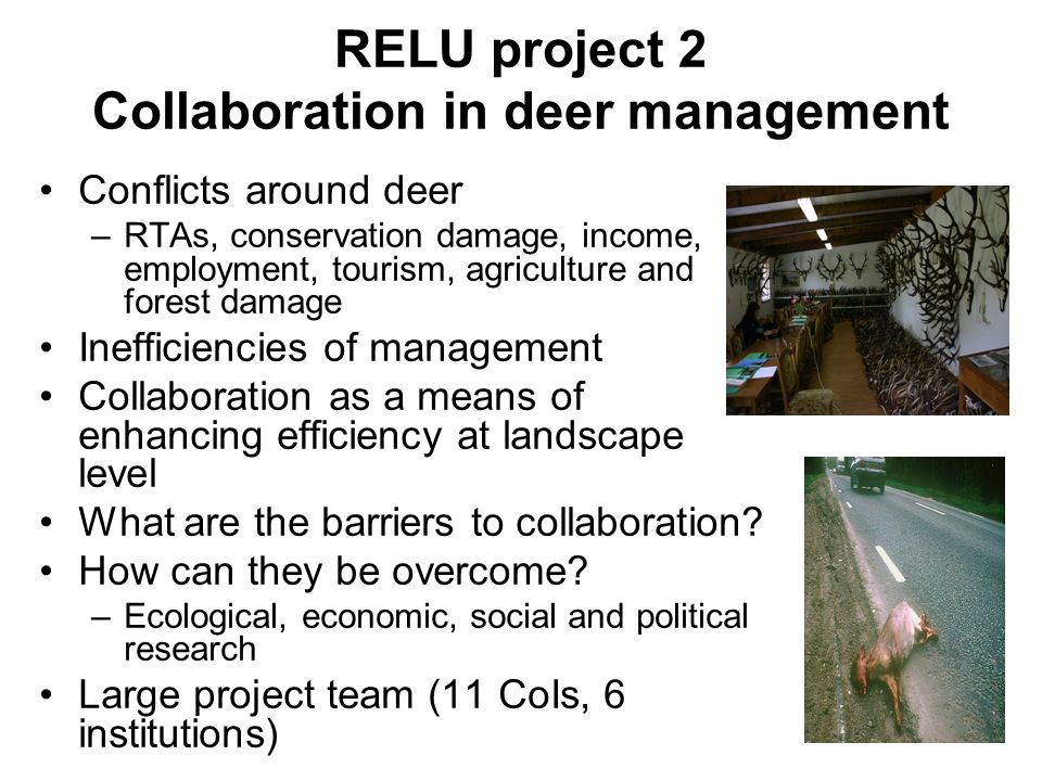 RELU project 2 Collaboration in deer management Conflicts around deer –RTAs, conservation damage, income, employment, tourism, agriculture and forest damage Inefficiencies of management Collaboration as a means of enhancing efficiency at landscape level What are the barriers to collaboration.