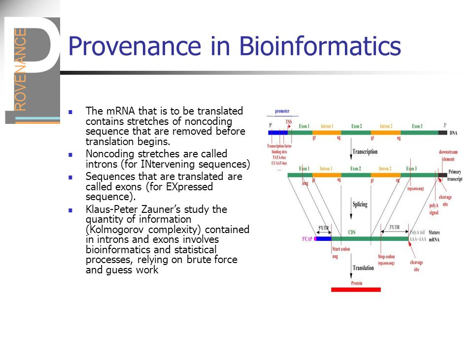 Provenance in Bioinformatics The mRNA that is to be translated contains stretches of noncoding sequence that are removed before translation begins.