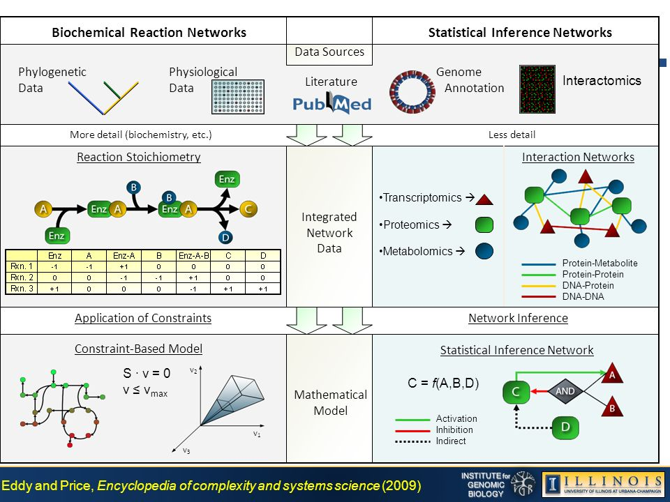 INSTITUTE for GENOMICBIOLOGY Biochemical Reaction NetworksStatistical Inference Networks Constraint-Based Model Interaction Networks Statistical Inference Network Application of ConstraintsNetwork Inference Transcriptomics Proteomics Metabolomics Reaction Stoichiometry Protein-Metabolite Protein-Protein DNA-Protein DNA-DNA Activation Inhibition Indirect C = f(A,B,D) Literature Genome Annotation Data Sources Interactomics Integrated Network Data Mathematical Model v3v3 v1v1 v2v2 S · v = 0 v v max Phylogenetic Data Physiological Data More detail (biochemistry, etc.)Less detail Eddy and Price, Encyclopedia of complexity and systems science (2009)
