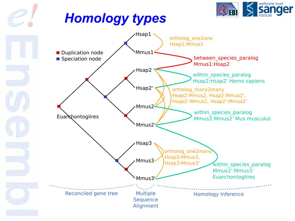 Homology types