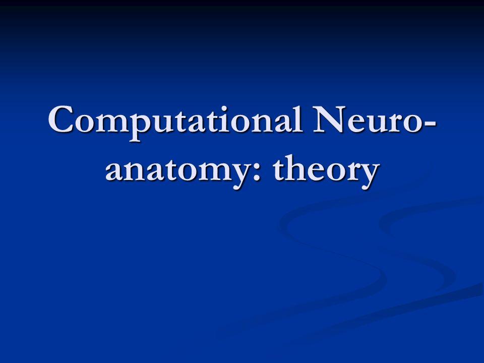 Computational Neuro- anatomy: theory