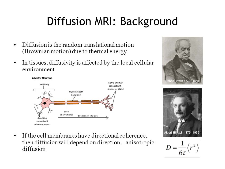Diffusion MRI: Background Diffusion is the random translational motion (Brownian motion) due to thermal energy In tissues, diffusivity is affected by the local cellular environment If the cell membranes have directional coherence, then diffusion will depend on direction – anisotropic diffusion