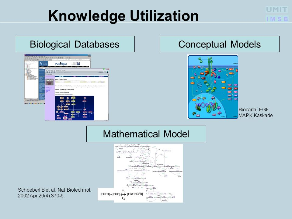 I M S B Knowledge Utilization Conceptual Models Biocarta: EGF MAPK Kaskade Mathematical ModelBiological Databases Schoeberl B et al.
