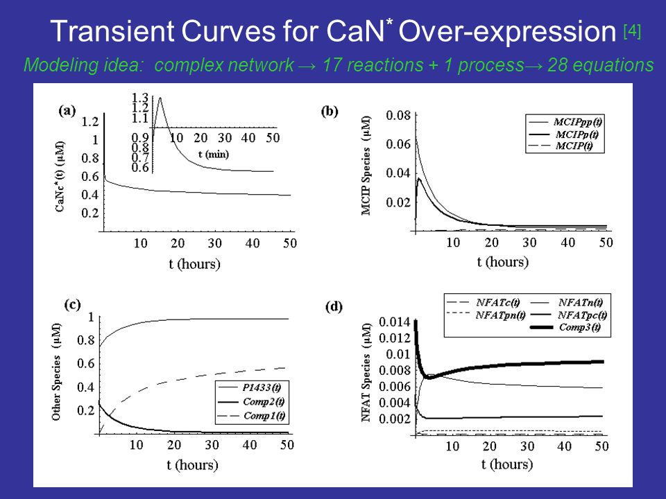 Transient Curves for CaN * Over-expression Modeling idea: complex network 17 reactions + 1 process 28 equations [4]