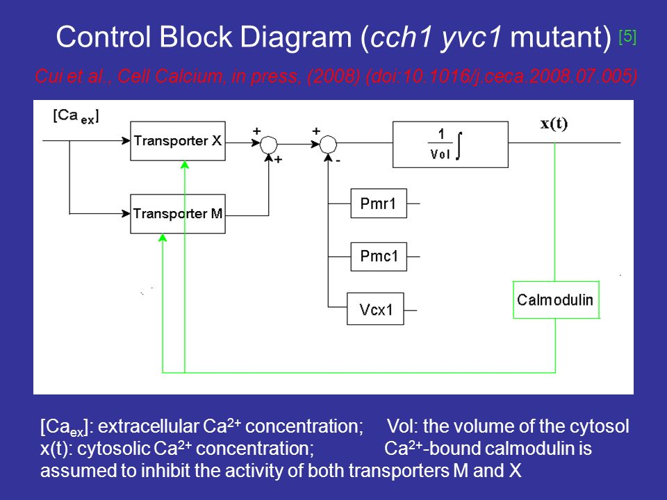 Control Block Diagram (cch1 yvc1 mutant) Cui et al., Cell Calcium, in press, (2008) (doi: /j.ceca ) [Ca ex ]: extracellular Ca 2+ concentration; Vol: the volume of the cytosol x(t): cytosolic Ca 2+ concentration; Ca 2+ -bound calmodulin is assumed to inhibit the activity of both transporters M and X [5]