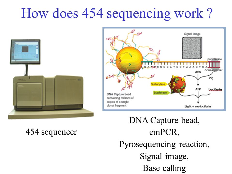How does 454 sequencing work ? 454 sequencer DNA Capture bead, emPCR, Pyrosequencing reaction, Signal image, Base calling