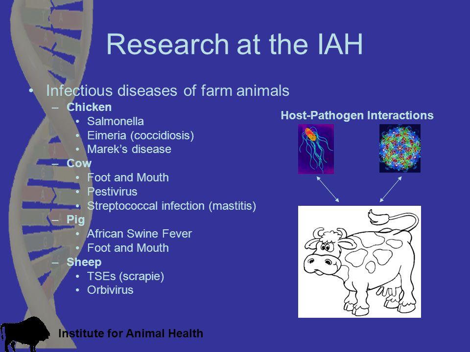 Institute for Animal Health Research at the IAH Infectious diseases of farm animals –Chicken Salmonella Eimeria (coccidiosis) Mareks disease –Cow Foot and Mouth Pestivirus Streptococcal infection (mastitis) –Pig African Swine Fever Foot and Mouth –Sheep TSEs (scrapie) Orbivirus Host-Pathogen Interactions