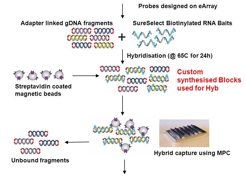 Probes designed on eArray Adapter linked gDNA fragmentsSureSelect Biotinylated RNA Baits Hybridisation (@ 65C for 24h) Streptavidin coated magnetic be