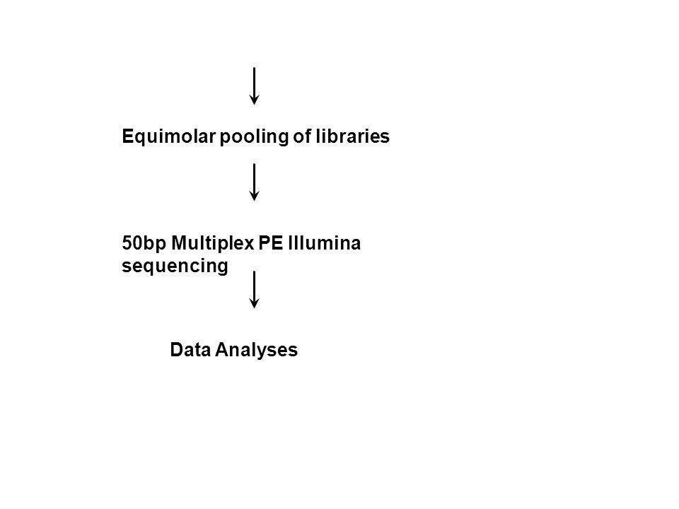 Equimolar pooling of libraries 50bp Multiplex PE Illumina sequencing Data Analyses